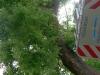 20110726_TE_Bienen_HAK_011