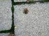 20110726_TE_Bienen_HAK_017